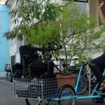 Baum-Transport mit Rad